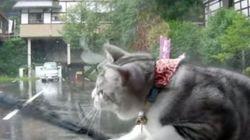 「ニャんだ、これ」ワイパーで遊ぶ猫がとんでもないことに(動画)