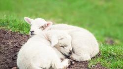 「羊を数えてはいけない」「寝不足は太る」−−睡眠学者が教えてくれた〝眠り〟に関する6つの真実。