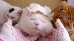 クロネコヤマトの肉球軍手、猫マッサージによく似合う