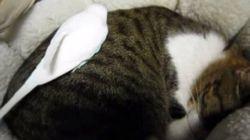 くるりと丸まる眠り猫、インコはそのうえ駆け回る