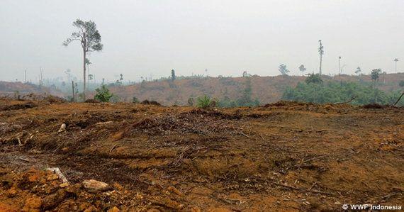 スマトラの森をめぐって:APP社サプライヤーと地域社会との長期化する紛争
