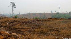 スマトラの森をめぐって:APP社・サプライヤー・地域社会の長期化する紛争