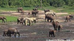 「ゾウの楽園」は守られた!中央アフリカ共和国からの報告