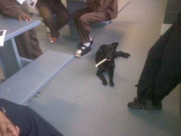 未成年の受刑者、犬を育てて自らも成長する