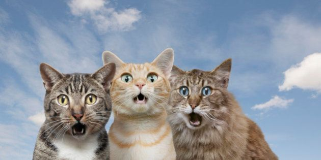 Cats with shocked expressions against blue