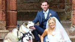 結婚式は、2匹のハスキー犬と♡ 新郎新婦の大切な家族がモフモフ