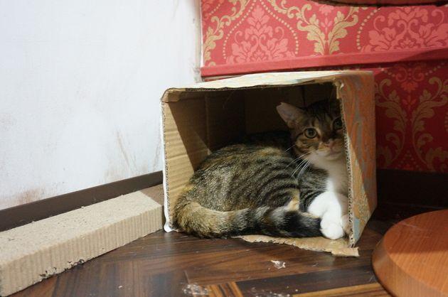 「猫の日」に考えたい、保護猫のこと。