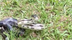 いいか、ヘビを怒らせるなよ。絶対に怒らせるなよ(警告動画)
