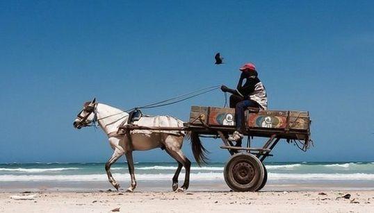 馬が砂浜を駆ける