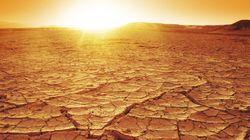 生態系の干ばつからの回復