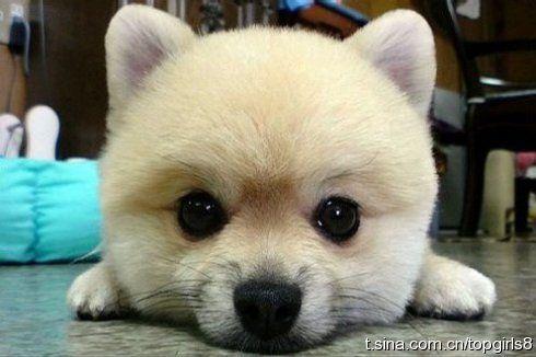 犬と暮らすべき21の理由(写真)