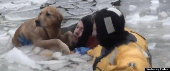 ポリ袋に閉じ込められたカメ。その命を救ったのは海の男たちだった(動画)
