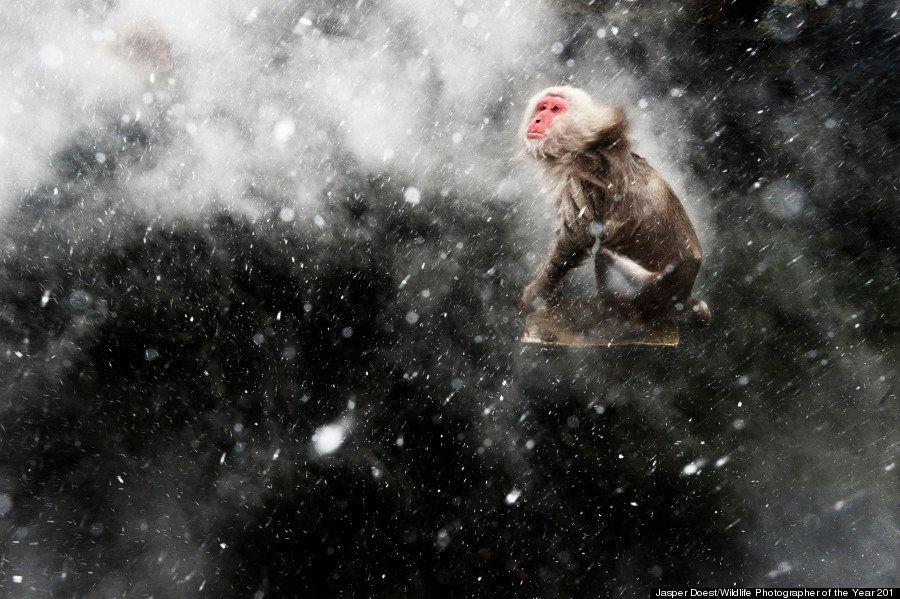 「母の頭上に子どもたちが大集合」野生生物写真コンテストの最優秀作品