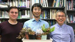 食虫植物の進化がゲノム解読から明らかに