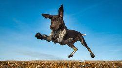 8000作品から選ばれた「犬の写真」コンテスト