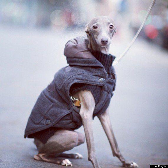 街角で見かけたおしゃれな犬たちの写真集