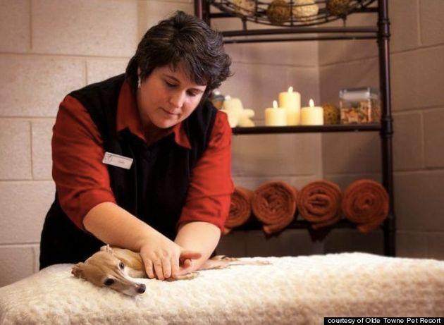 ペットのための豪華リゾートホテル(動画と画像)