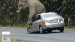 ゾウ、タイの国立公園で暴れちゃったゾウ