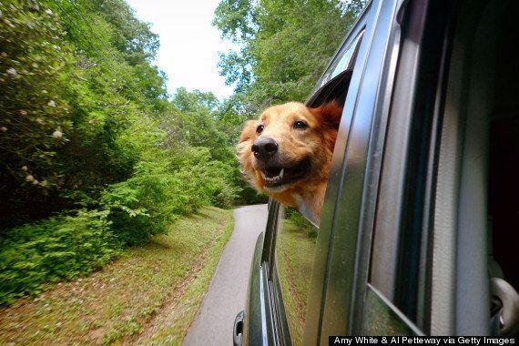 あなたより世界中を旅行している13匹の犬たち