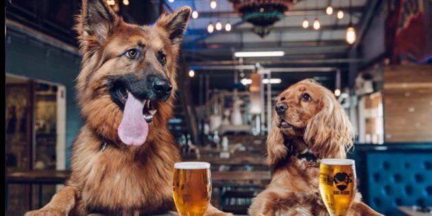 犬好き社員、歓喜?