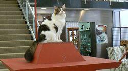 フランク・ロイド・ライト設計の猫ハウス、威風堂々と博物館に鎮座(猫ジャーナル)