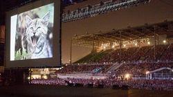 開催ごとに規模が大きくなっていく、猫動画フェス まもなく開催