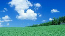 TPP協定は日本の砂糖農家を直撃する