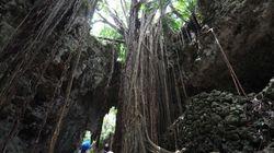 大自然に満ちた神秘、沖縄のパワースポット8選