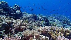沖縄から、涼やかな「ケラマブルー」海中写真10選