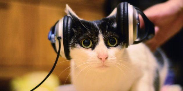 Cat listening to music, Taipei City,