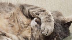 猫のようにぐっすり眠りたい(画像)