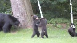 クマの親子がすっごく楽しそうにロープ遊びしてる。......うちの庭だけど【動画】