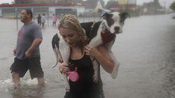ハリケーン「ハービー」 人々は、取り残された動物を見捨てなかった。