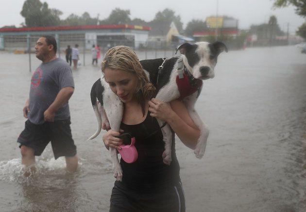 ハリケーンで取り残された動物たち。人々は見捨てなかった。