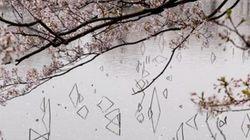 葉桜の下、蓮が織りなす景色が、幻想的。【画像】