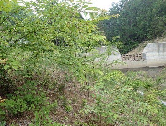 直根苗木を使ったモデル林を造成し、堰堤との一体化を図った森林強靭化の例=図と写真は、いずれも山寺喜成さん提供