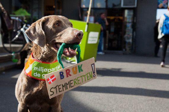 ノルウェー選挙運動で話題となっている、「お掃除犬」とは?