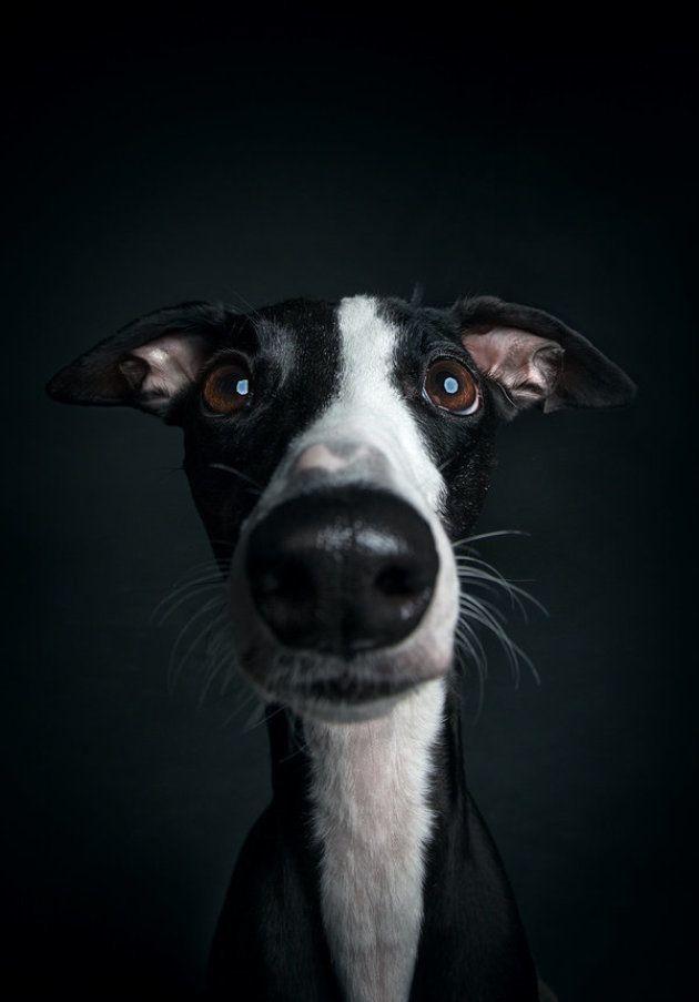 笑顔、悲しみ、驚き。人間みたいな表情をする犬たちに癒される