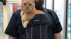「抱っこして」せがむ猫に、保護施設職員がキュートな解決策を考案