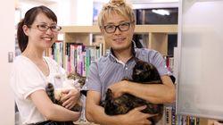 猫とはたらくvol.01「目的は、猫を職場で飼うことではなく、保護できる猫を増やすため」