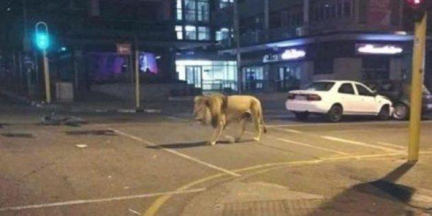「ライオンが逃げ出した」「川内原発で火事」Twitterでデマ拡散【熊本地震】