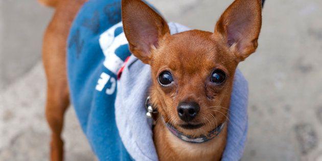 (写真はイメージ)イタリアの犬