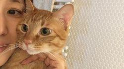 """石田ゆり子さんの愛猫たちの""""おしゃべり""""に耳をすませば"""