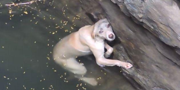 ああ、胸が張り裂けそう….。井戸に落ちたワンちゃん、溺れる直前に命を救ってくれたのは…?