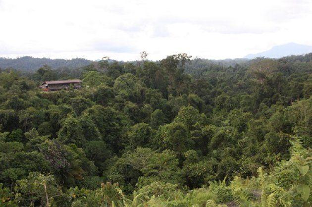 ●マレーシア版森林認証を得た、サラワク州、ゼッティ社のAnap-Muput持続的森林管理のモデル管理区。25年サイクル、全対象木マッピングと択伐の低インパクト伐採が行われている