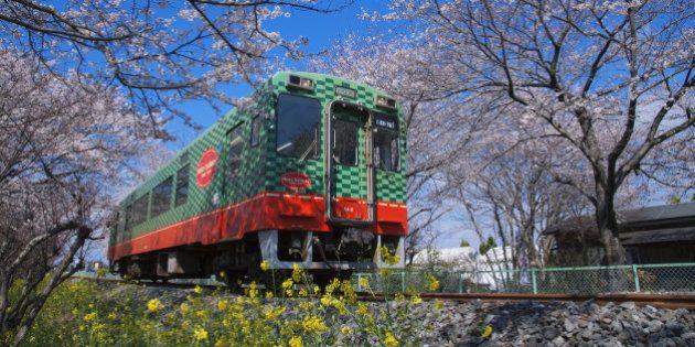 Japan, Kanto Region, Tochigi Prefecture, Moka, View of Moka Railway Line with cherry tree. (Photo by:...