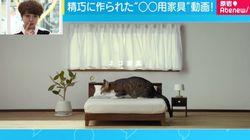 ネコ用家具の受注スタート PR動画だけのつもりが問い合わせ殺到