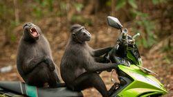 猿がヤンキー化するとこうなる。「動物写真コンテスト」が二度見するしかない面白さ