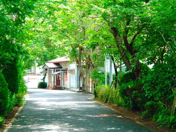 近頃では、近隣の住民の方の引越しに伴い、家庭の庭に植えていた樹木の寄付なども増えてきたという。