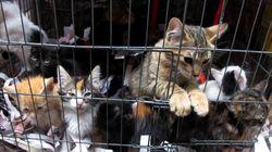 繁殖しすぎたネコ53匹、部屋に放置 深刻化するペットの「多頭飼育崩壊」とは